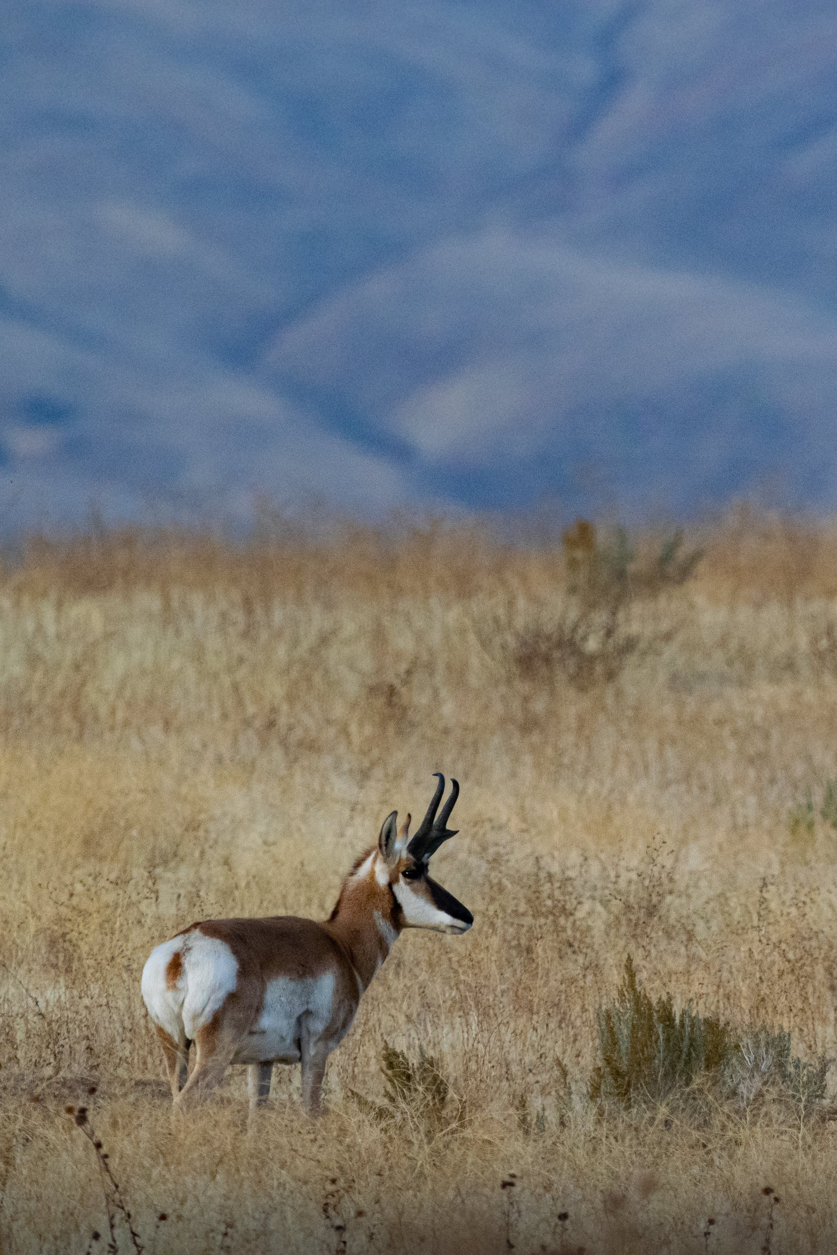 New Free Stock Photo Of Animal Wild Animal Antelope Animals Wild Animal Photography Dogs Animal Photo