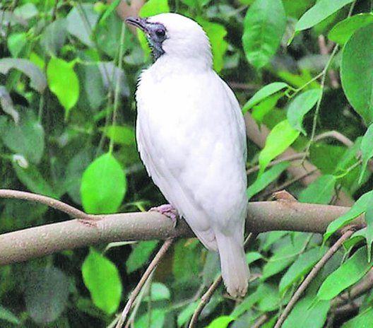 los animales en amenaza, corren el riesgo de desaparecer...., hay que tener conciencia y protegerlos!, Pato serrucho o mbyguati es uno de ellos http://www.abc.com.py/articulos/animales-amenazados-del-paraguay-44805.html