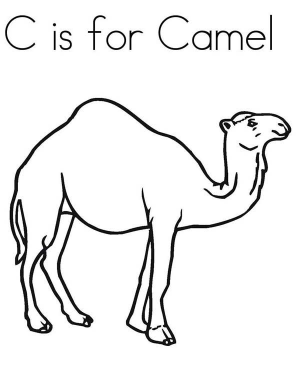 Camel Coloring Pages For Students - Preschool and Kindergarten ...