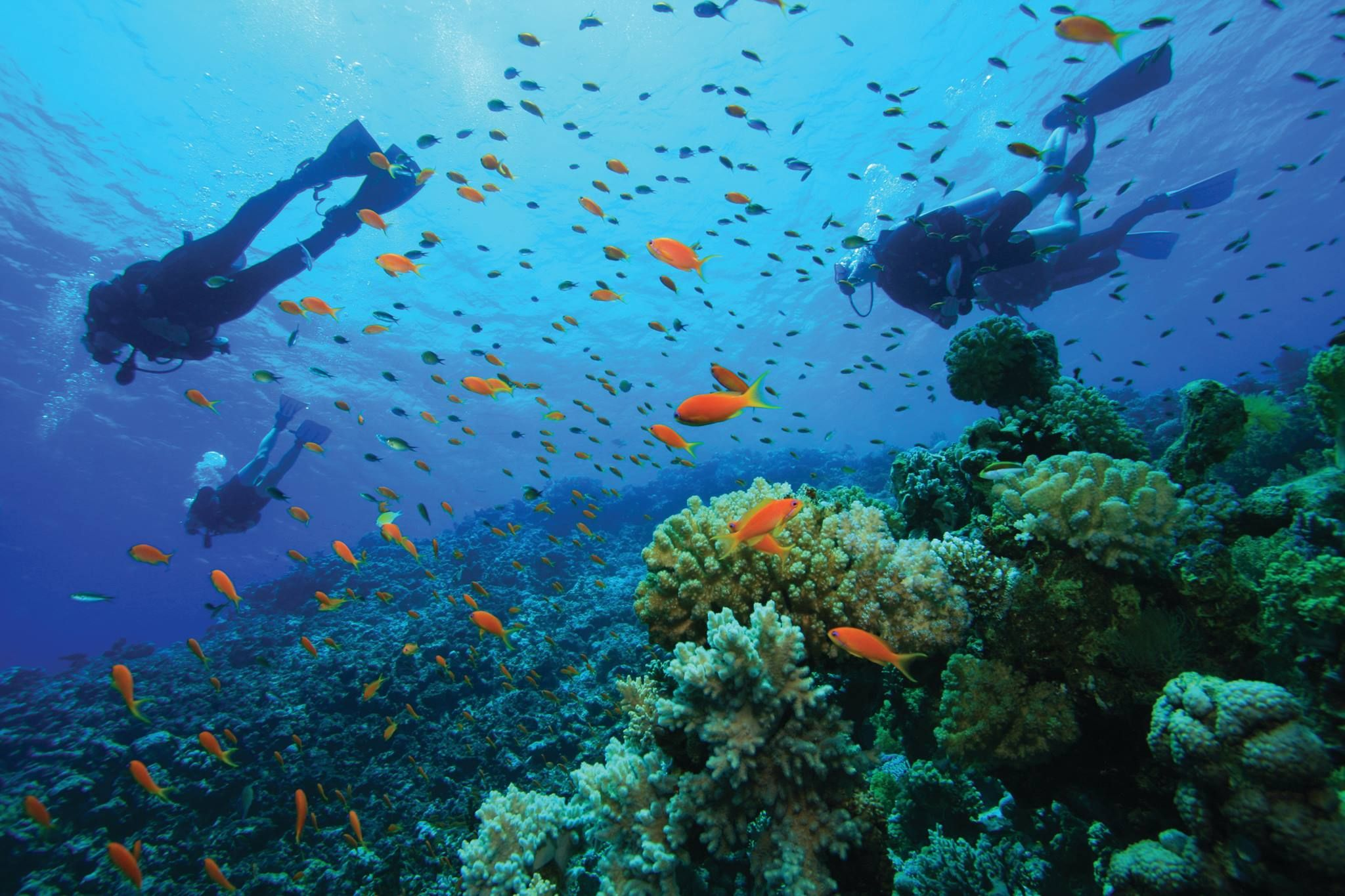 Dive in to the deep blue surrounding Banana Island Resort Doha by ...