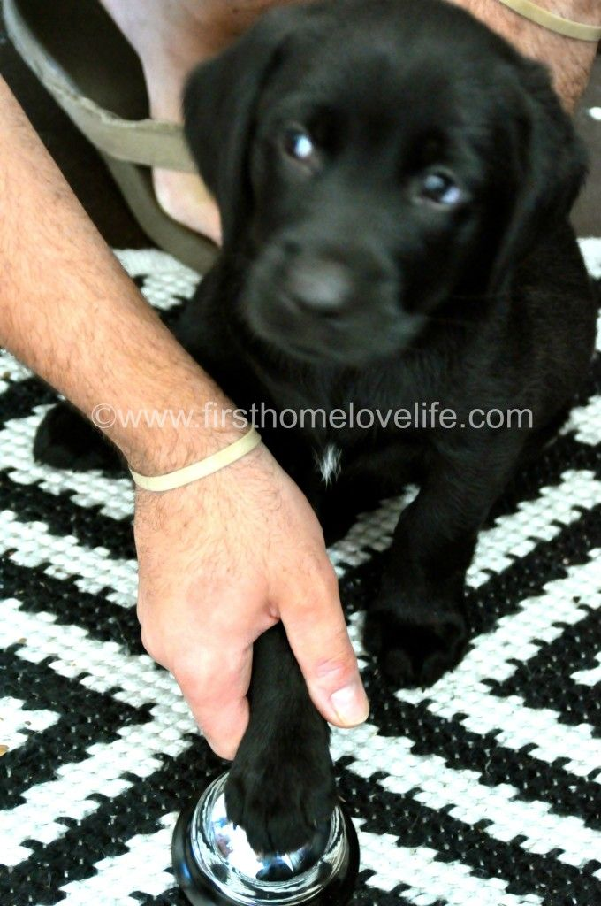 Potty Training Puppy Using A Bell Puppy Training Potty Training Puppy Training Your Dog