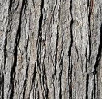 Actual Texture Tree Bark Texture Texture Photography Texture