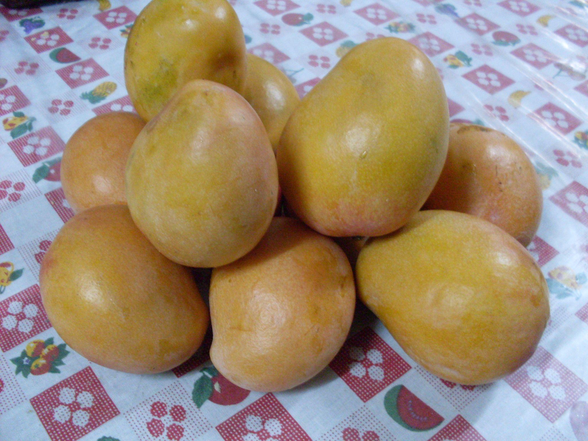 Mangos ya lavados   Frutas de mi pais   Pinterest