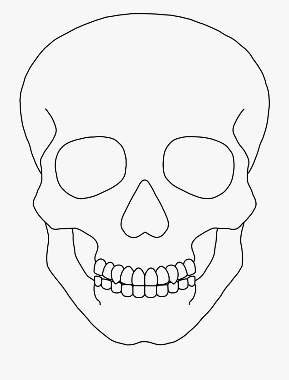 Skull Outline Clip Art Simple Human Skull Drawing Is Popular Png Clipart Cartoon Images Explore And Dow In 2020 Human Skull Drawing Outline Drawings Skull Drawing