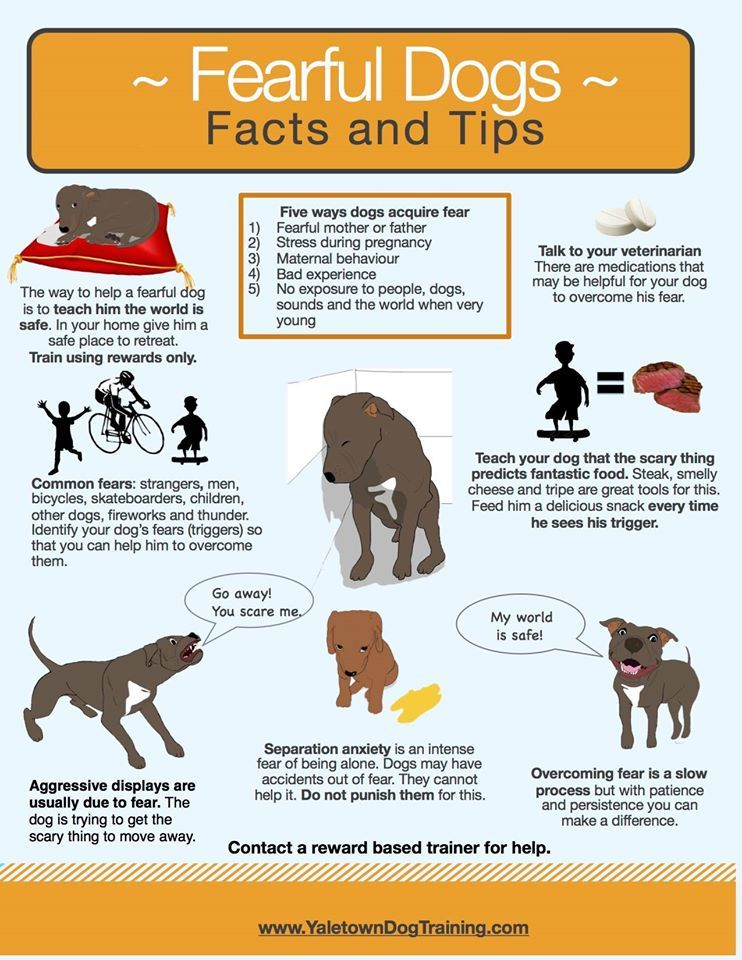 Wonderful Tips About Fearful Dogs From Sarah Pennington Of