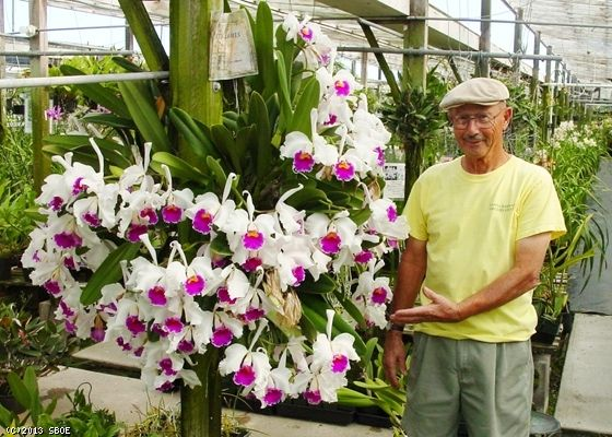Specimen Cattleyas Orchid House Orchids Beautiful Orchids