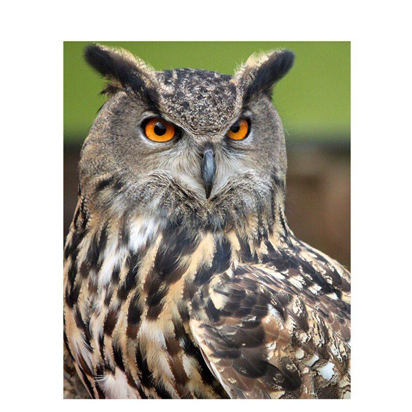 DIY Digital Painting By Numbers Package Winking owl oil