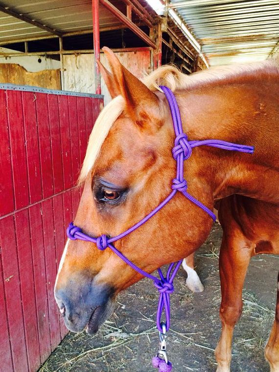 Custom 4 Knot Rope Halter Yacht Rope Halter 4 Knot Halter Etsy In 2020 Horses Horse Halter Rope Halter