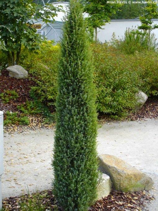 3a3ced1889ffb760f9dbe16c03440157 - Nebraska Nursery And Color Gardens Lincoln Ne