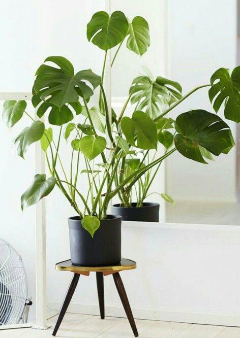 plante sur tabouret retro jardin et terrasse pinterest. Black Bedroom Furniture Sets. Home Design Ideas