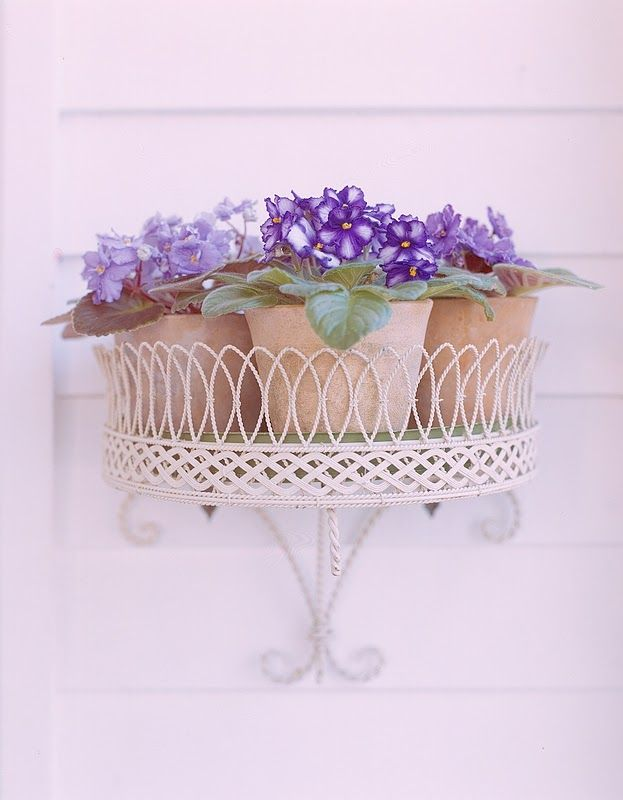 Walmart and Home Depot have several kinds of purple potted plants that  could make very inexpensive