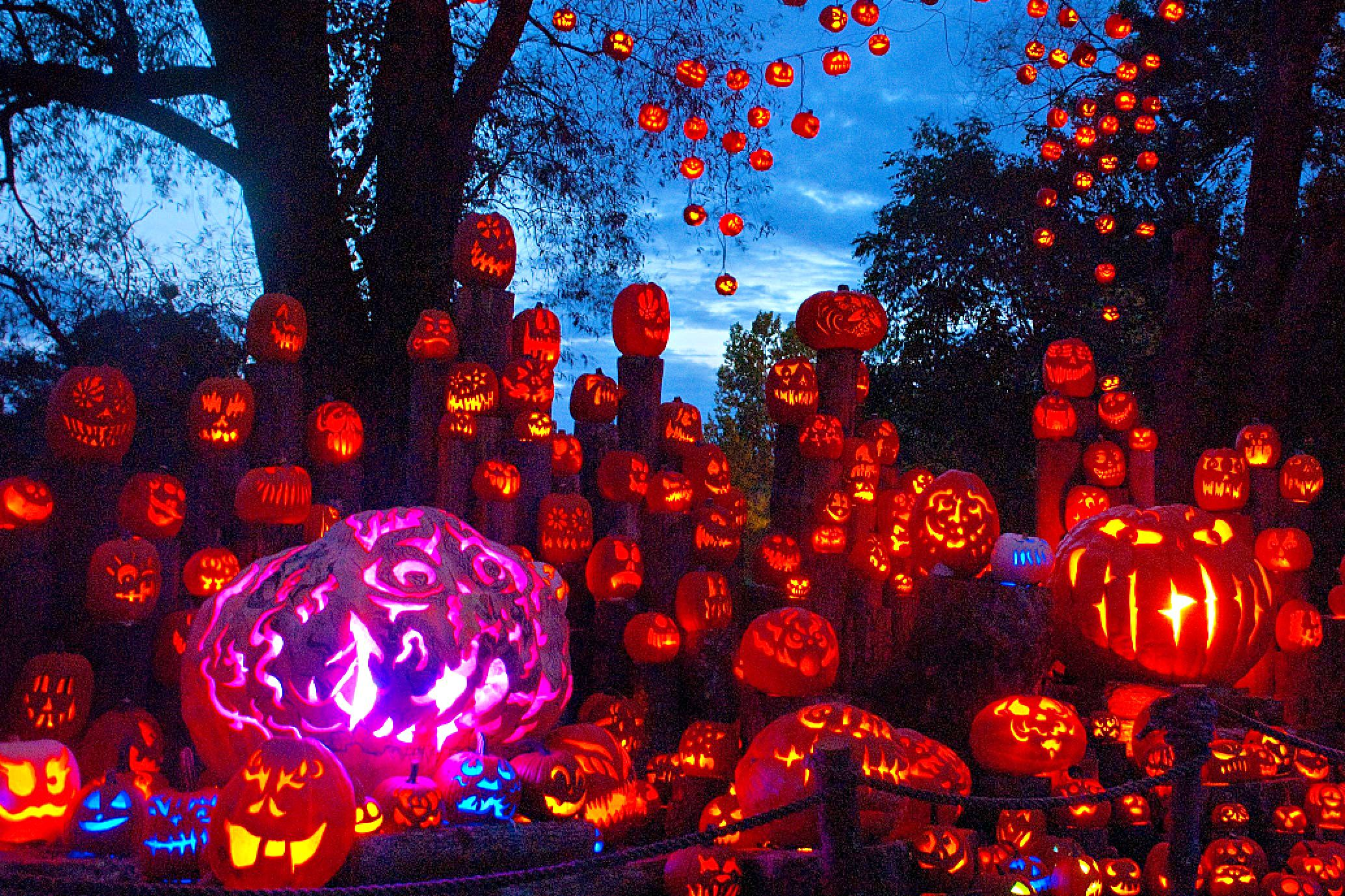 Lambertville Nj Halloween Pumpkins 2020 Pumpkin Festivals and Jack O' Lantern Displays in New England in