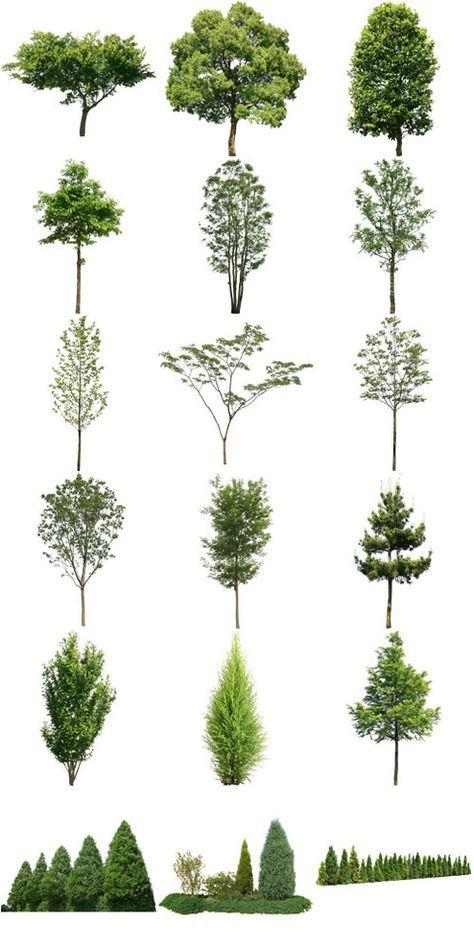 クスノキやネムノキなどの樹木フリー素材 景観設計 庭作りの