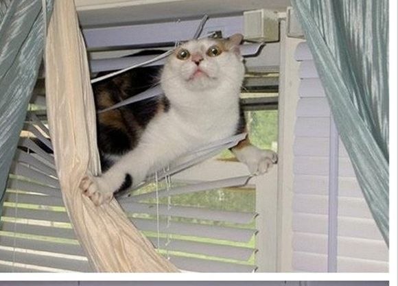Is There A Way To Keep The Cats Out Of The Blinds Funny Pictures Funny Animal Pictures Laugh