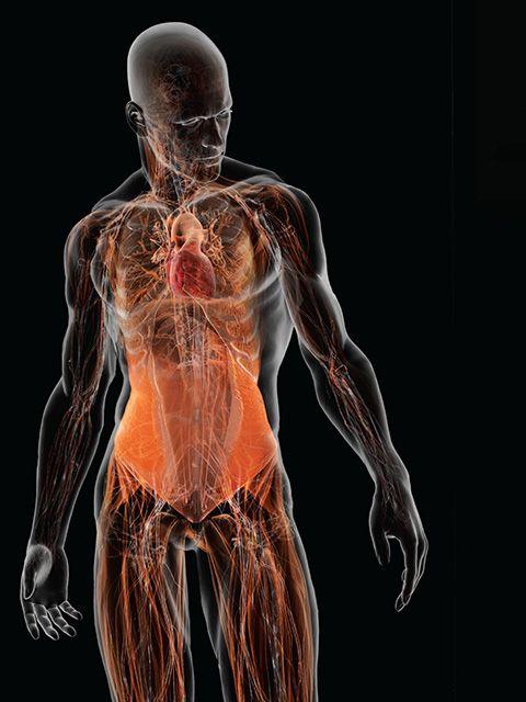 cuerpo humano 3d organos - Buscar con Google | Cuerpo Humano ...