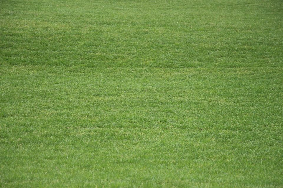 Free photo grass texture summer structure green meadow