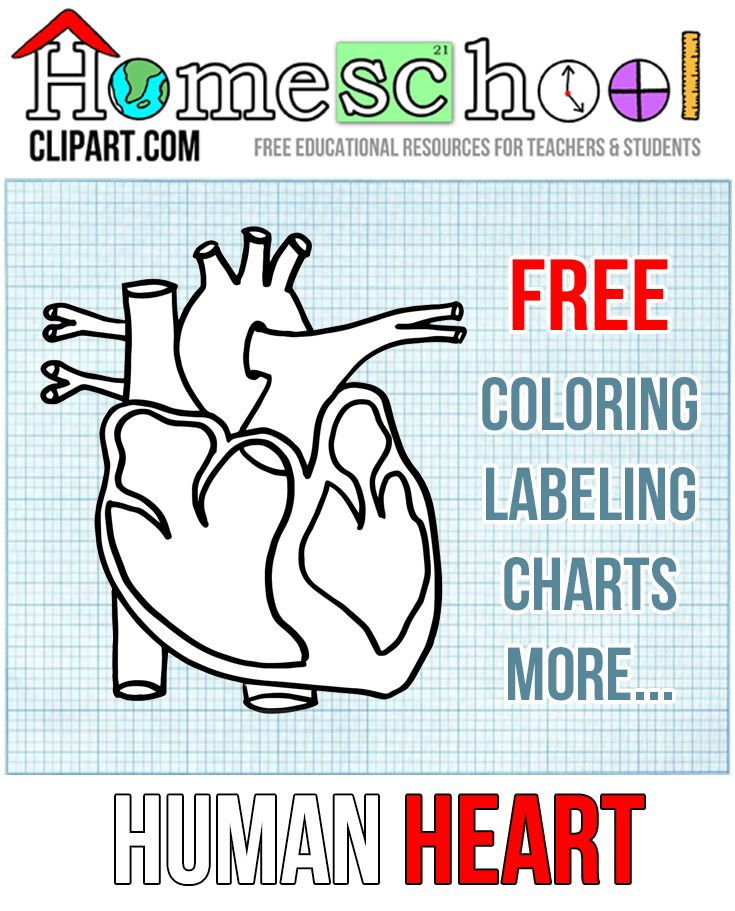 Human Heart Resources for Homeschool