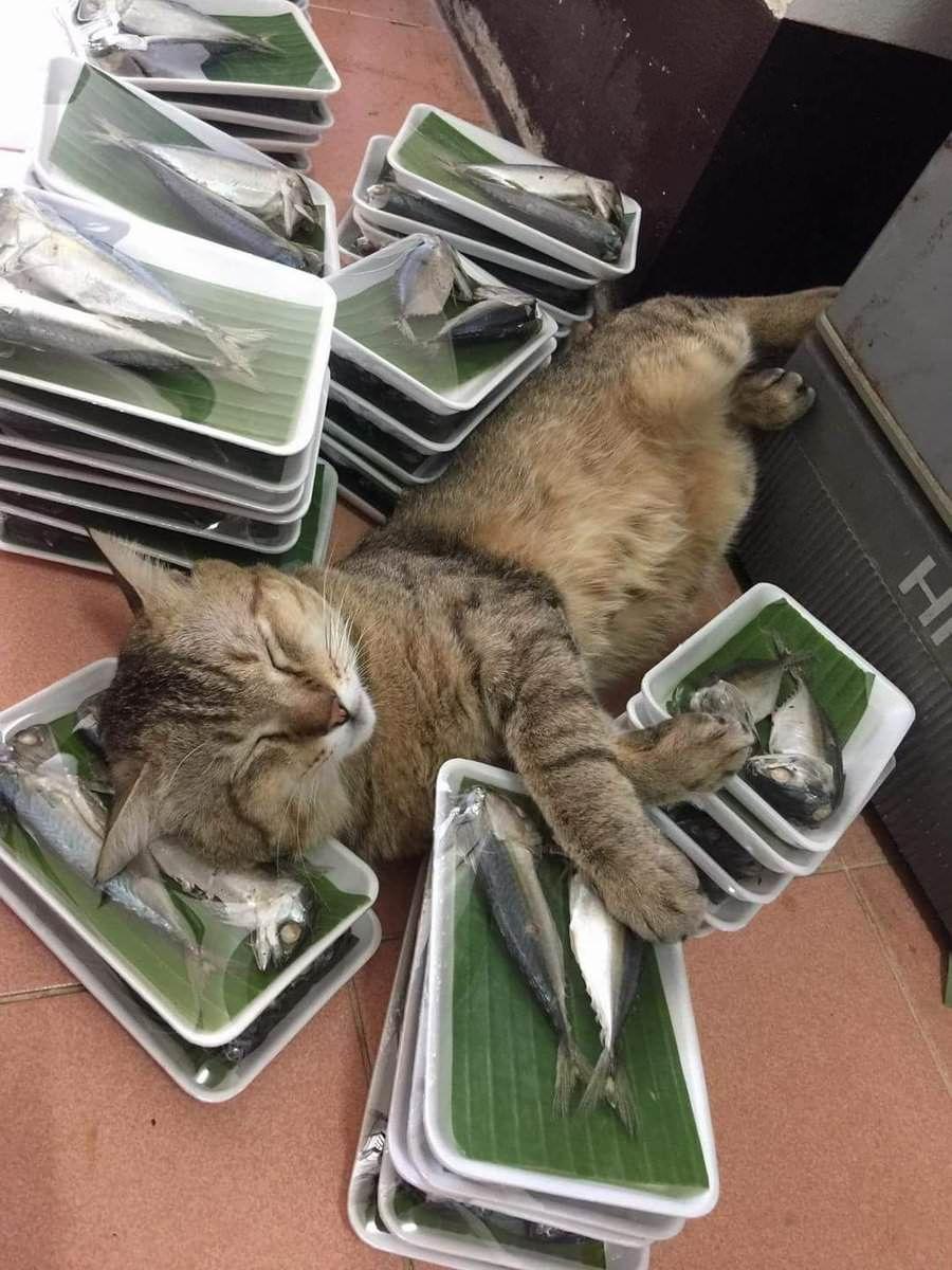 touch da fishy heaven