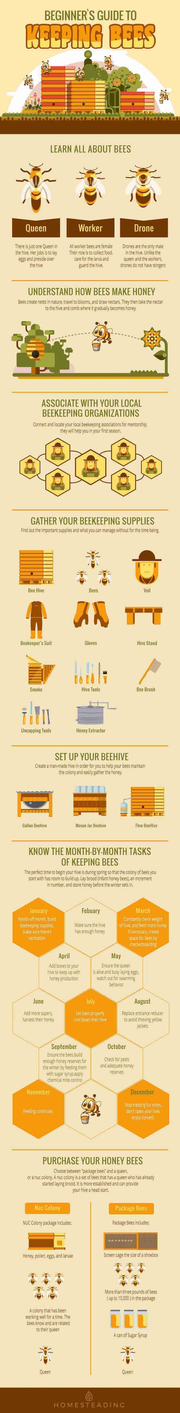 Beginners Guide To Keeping Bees Bees Bee Keeping And Beekeeping - Backyard beekeeping for beginners