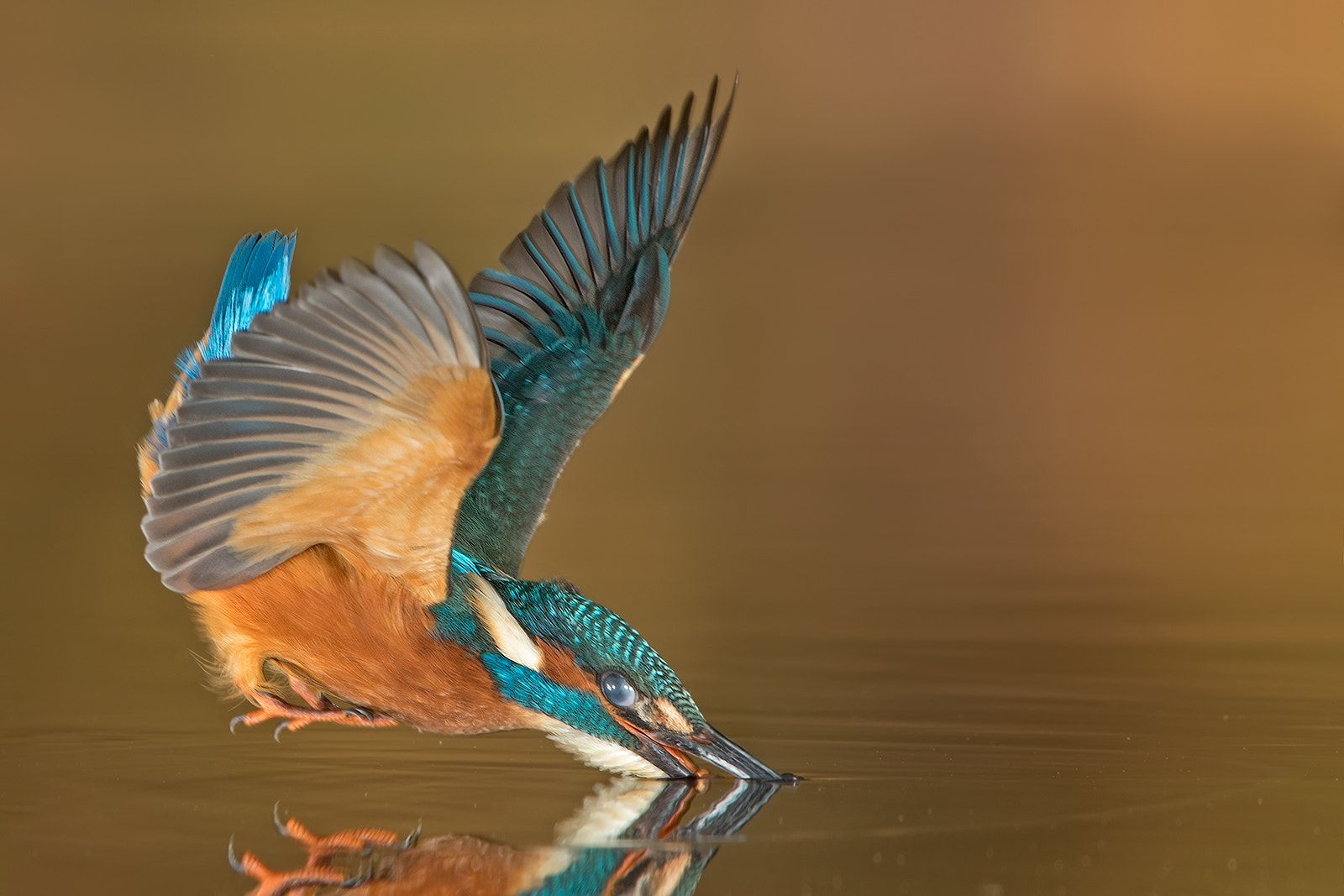My kingfisher project Every year in the late summer