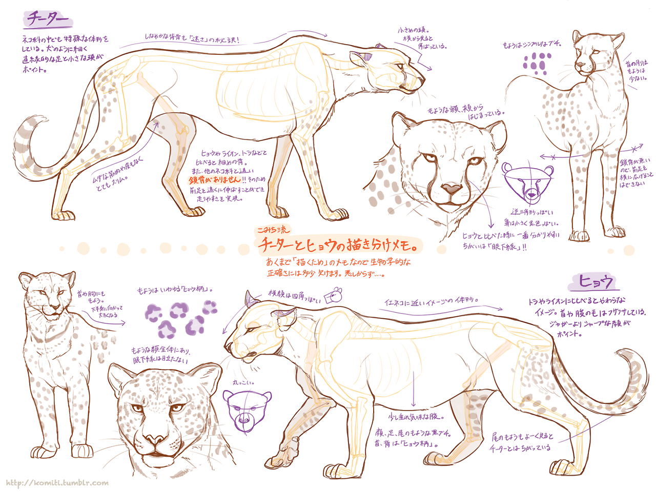 Cheetah_body_studynotes by komiti // http://komiti.tumblr.com ...