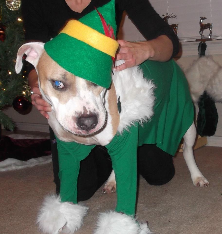 Diy Elf Dog Costume Made Of Felt Small Girls Green Shirt
