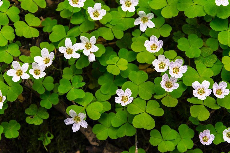 Flor, Flores, Bloom, Branco, Verde, Floresta