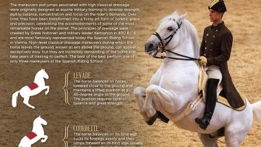 The maneuvers and jumps associated with high classical dressage were originally designed as equine military training to develop strength, agility, balance, concentration and focus on the rider's demands. Over time, they have been transformed into a living art form of balletic grace and precision, celebrating the accomplishments of some of the most remarkable horses on …