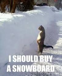 Snowboard Memes Snowboard Steez Snowboard Cats Funny Animals