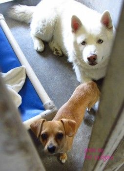 Small Dog Left Alone At Animal Control After His Friend Is Adopted Animals Dogs Dog Adoption
