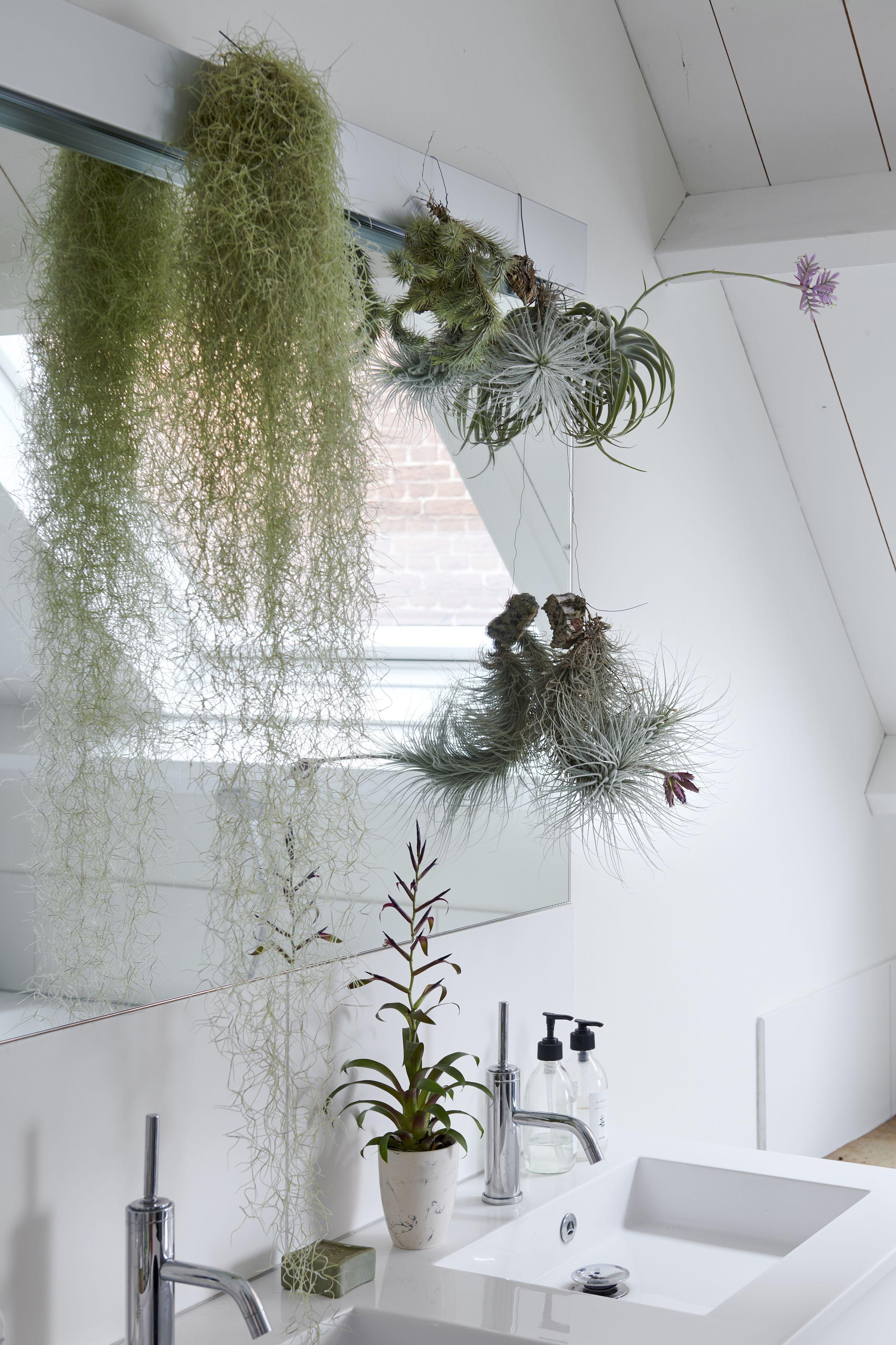 Badezimmerpflanzen Fur Den Mai Badezimmerpflanzen Zimmerpflanzen Schlafzimmer Pflanzen