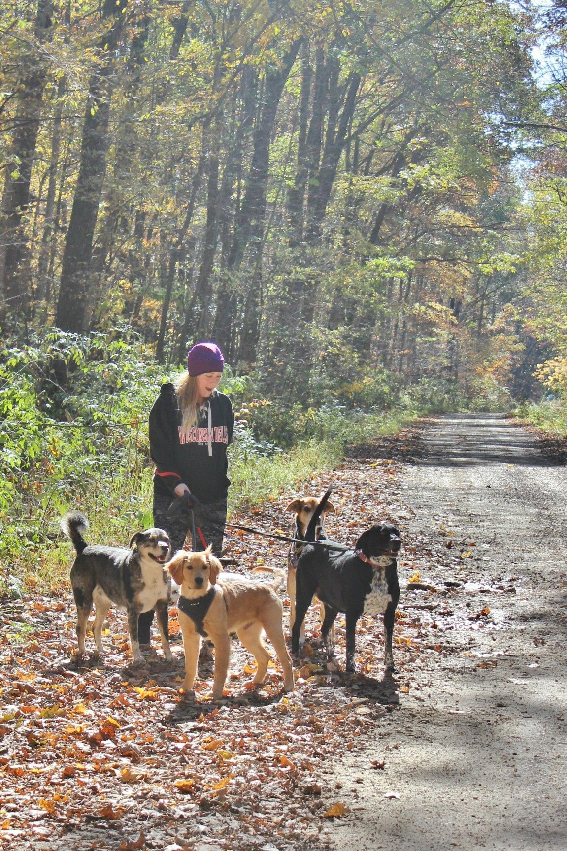 Raelin Walks Maisie Lab Mix Rusty Catahoula Leopard Dog Mix
