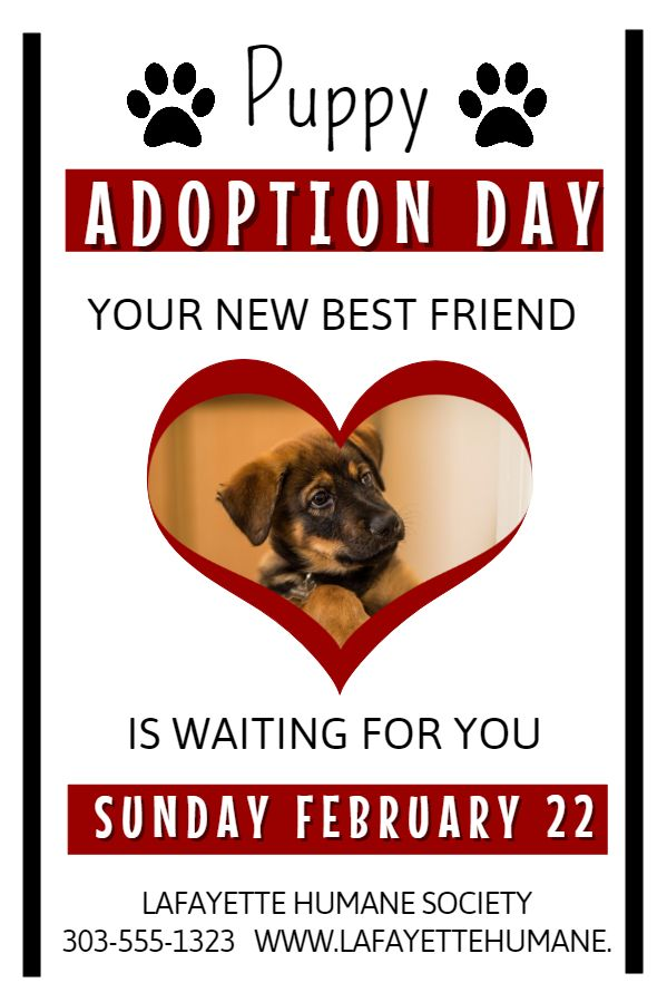 Dog Adoption Flyer Template  Lost Pets And Pet Adoption Flyers