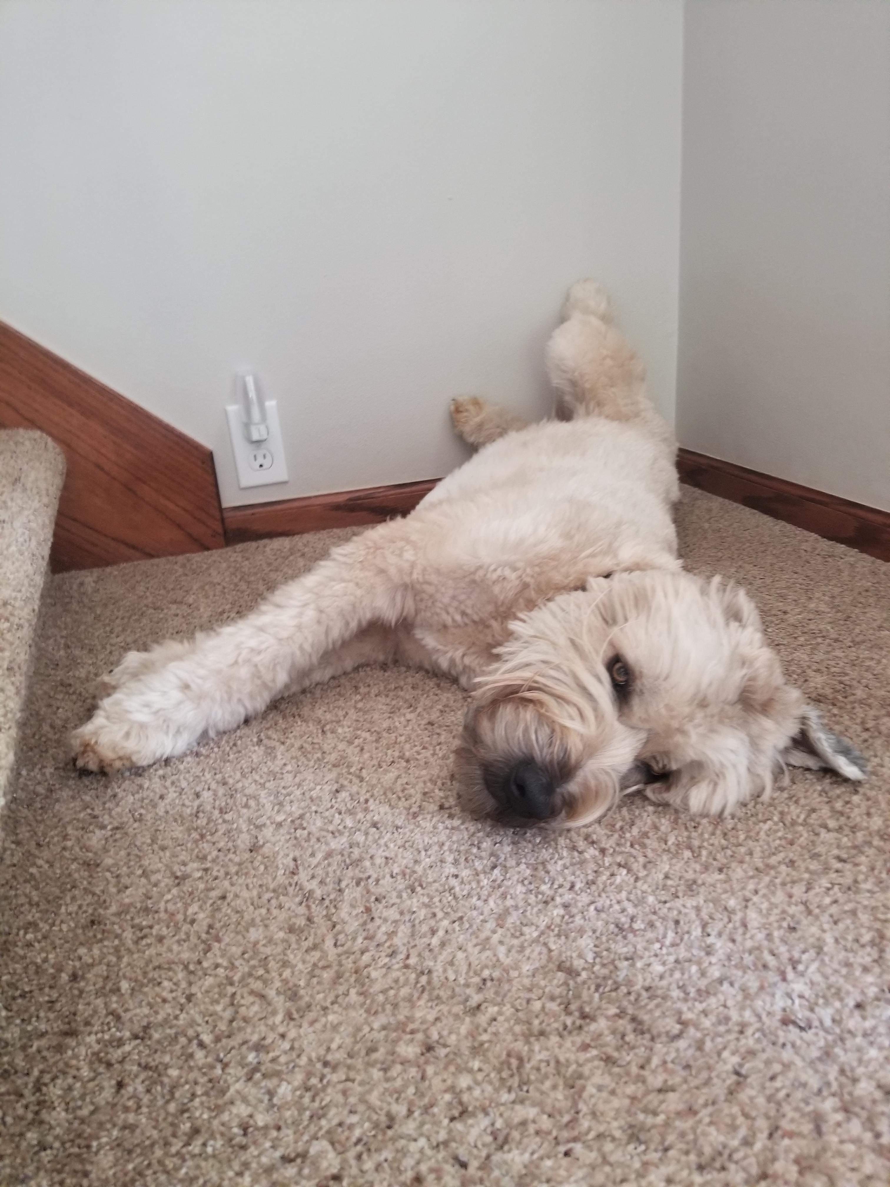 Heckin tired boye http://ift.tt/2sHH4cZ