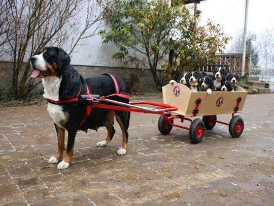 Bus Is Here With Images Funny Dog Pictures Funny Animal