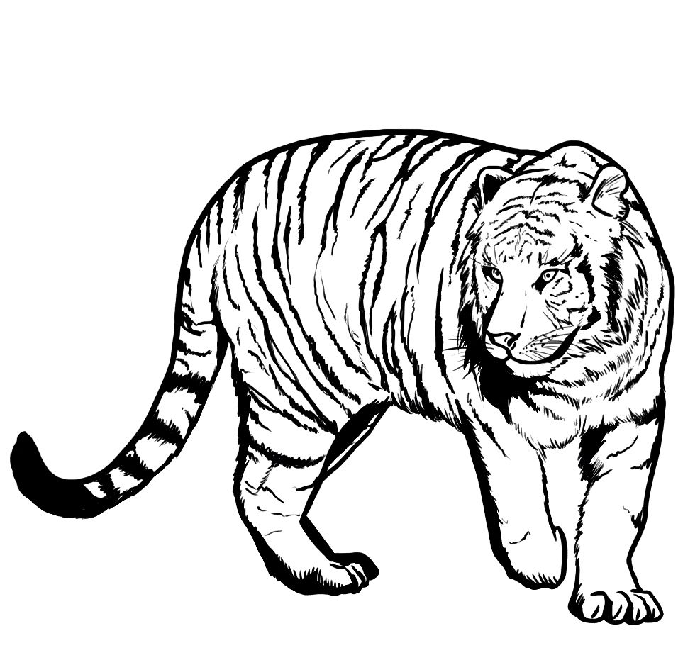 printable tiger coloring pages for kidsjpg 987 - Tiger Coloring Pages For Kids