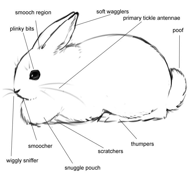 anatomy of the bun | hahaha | funny bunnies, bunny, rabbit anatomy bunny diagram #10