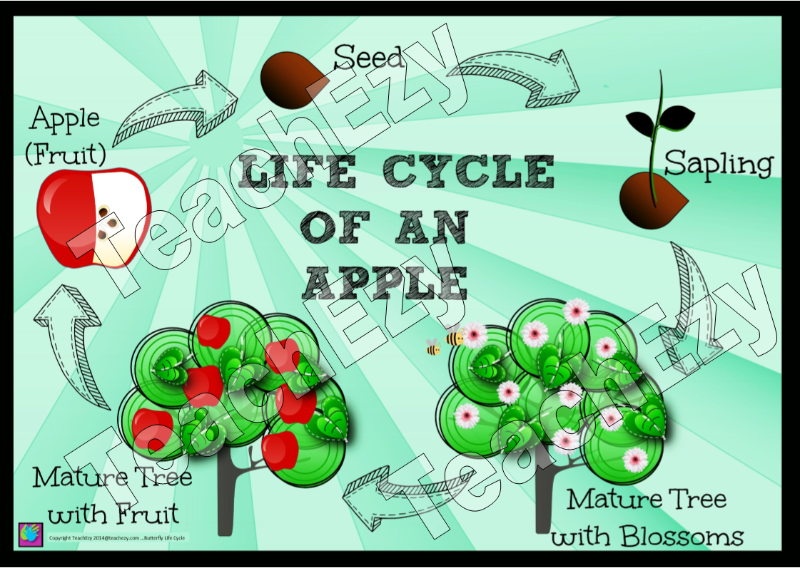 Apple Life Cycle Poster And Unit Of Work By Teachezy