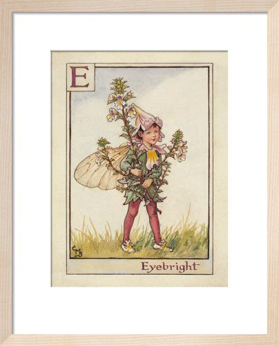 Eyebright Fairy Art Print by Cicely Mary Barker at King & McGaw