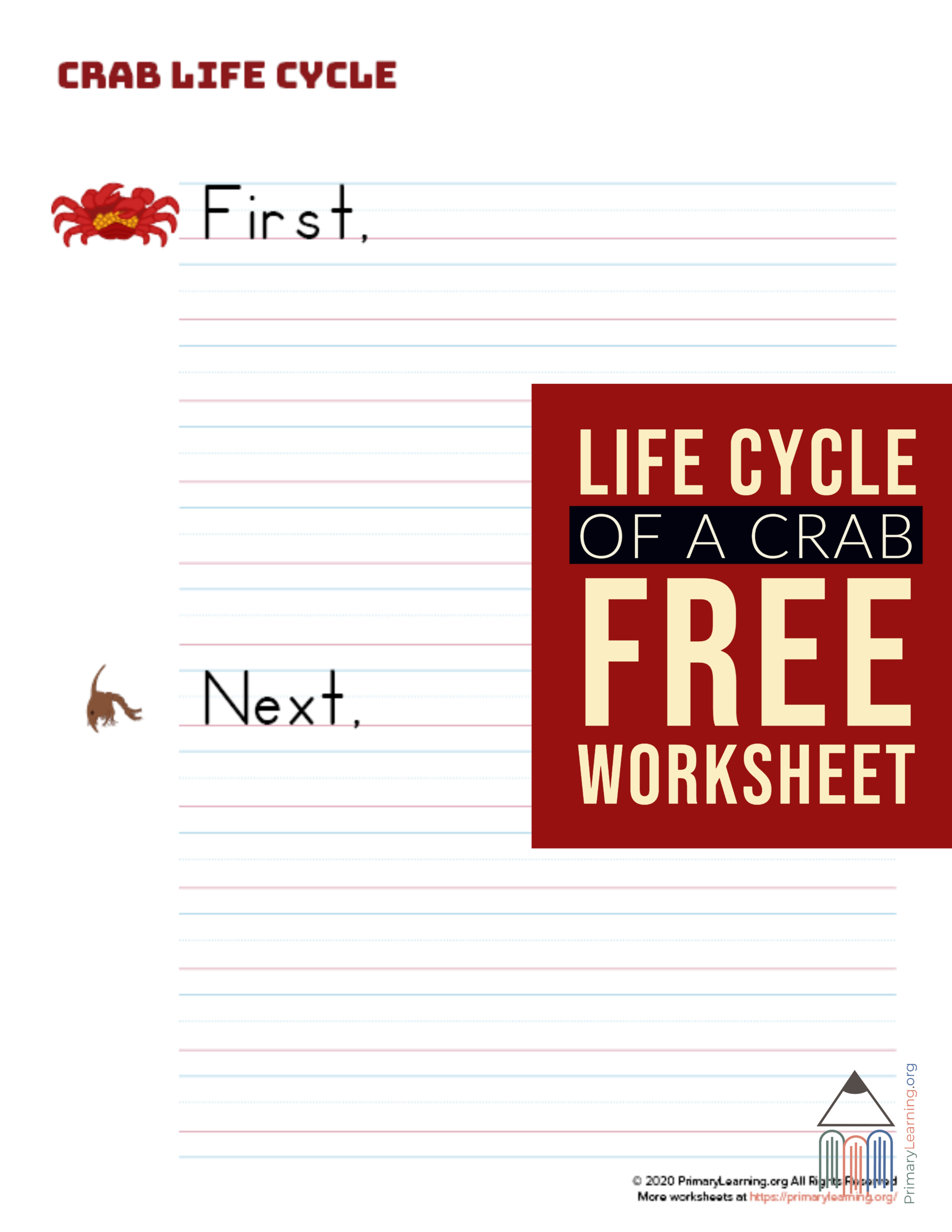 Crab Life Cycle Writing Prompt