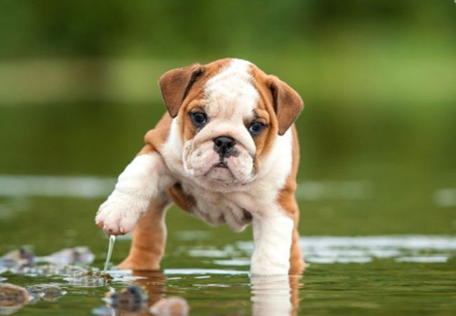 7 Cutest Dog Breeds In The World Dogs Funny Dog Fails Dog