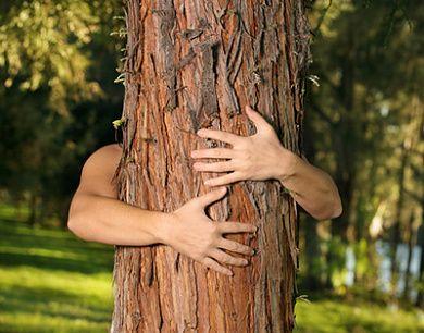 Körper und Geist: Warum Waldspaziergänge so gesund sind - ☼ ✿ ☺ Informationen und Inspirationen für ein Bewusstes, Veganes und (F)rohes Leben ☺ ✿ ☼