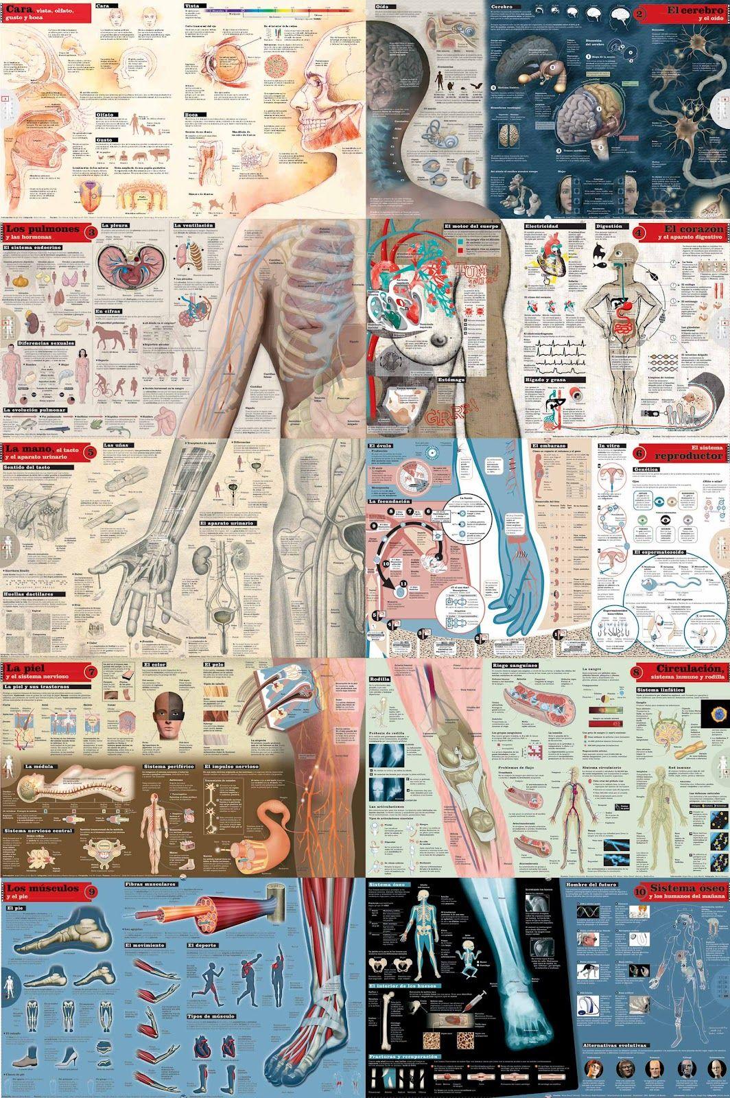 Completa infografía sobre la anatomía humana | cosas de clase ...