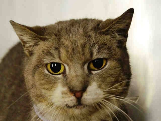 Nyc To Be Destroyed 04 12 15 Sweet Heart Tiry Came To Us As A Stray 4 08 15 At 9 Yrs Old Finder Stated Tiry Is Frien Cat Hug Cat Adoption Cats And Kittens