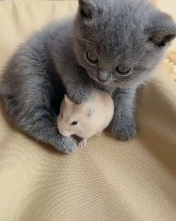 Baby Kitty made a new friend today… #kittycats