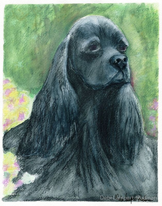 Black Cocker Spaniel: Says it all with her Eyes