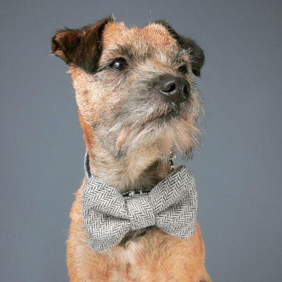 Black And Grey Herringbone Tweed Dog Collar By Charliebegood
