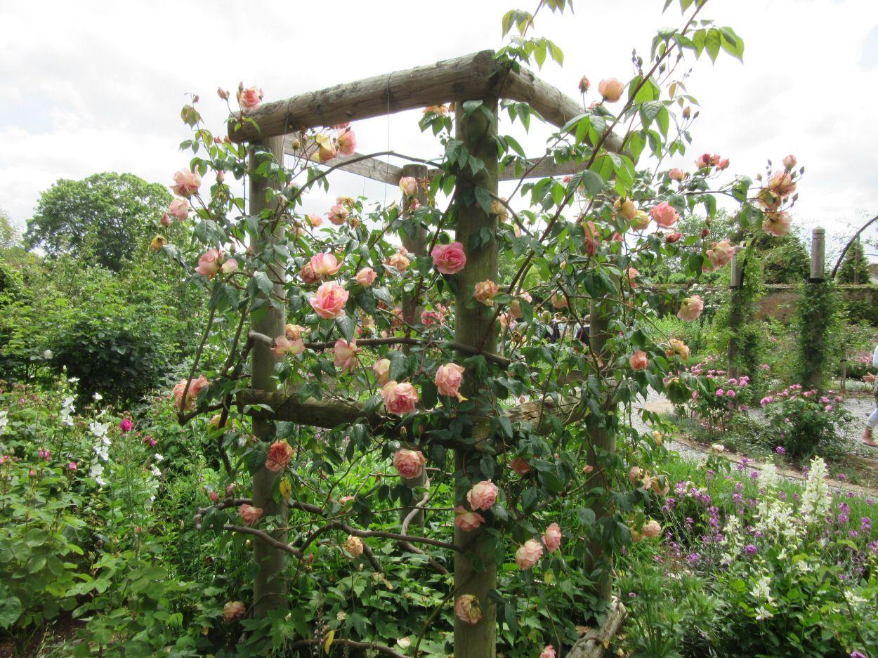Klettergerüst Rosen : So ein klettergerüst? mirja garten pinterest klettergerüst