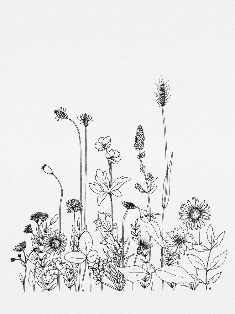 Wildflowers Art Print By Wildbloom Art X Small Wildflower Drawing Line Art Drawings Flower Line Drawings