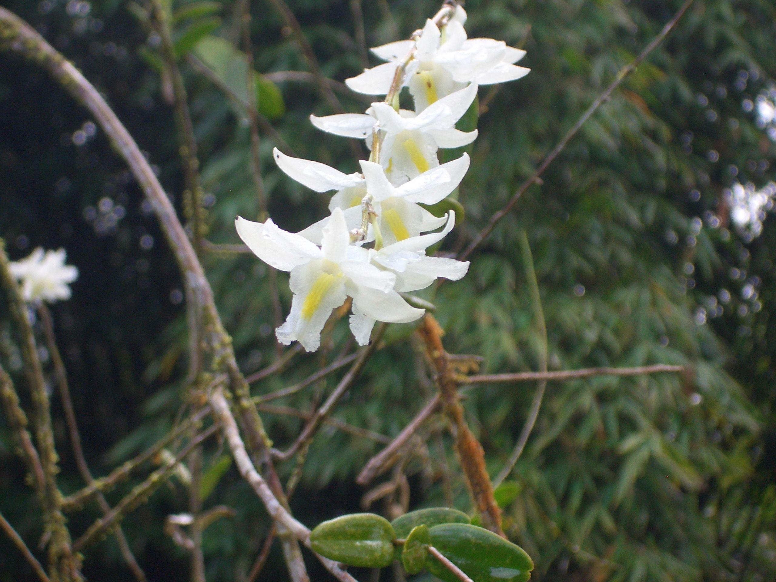 orchids wet tropical rainforest